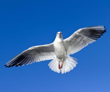 Die Taube als Symbol des Heiligen Geistes