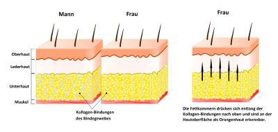 Aufbau Bindegewebe