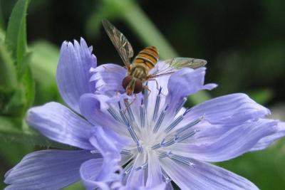 Blüten mit Insekten / Foto: Susanne Jost, Untere Naturschutzbehörde