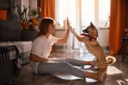 8 Ideen wie du deinen Hund sinnvoll zu Hause beschäftigen kannst