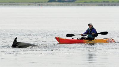 Delfinbeobachtung vom Kajak. Foto: Charlie Phillips