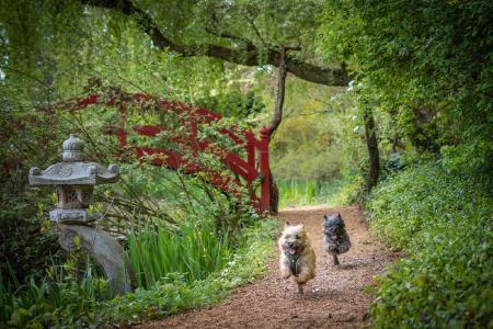 Hundespieltage im Schlosspark Dennenlohe