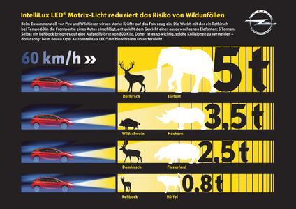 Kollision vermeiden: Unsere heimischen Wildarten bringen es auf Gewichte bis zu 200 Kilogramm, die sich multipliziert um die Geschwindigkeit des fahrenden Autos zu einer Aufprallenergie in Tonnenstärke steigern – so wird aus einem Hirsch quasi ein Elefant