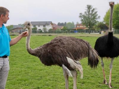 Bad Füssing: Europas beliebtester Kurort - auch ein besonderes Paradies für Tierliebhaber, Foto: Kur- & GästeService Bad Füssing