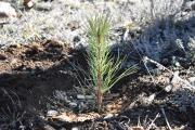 (c) One Tree Planted