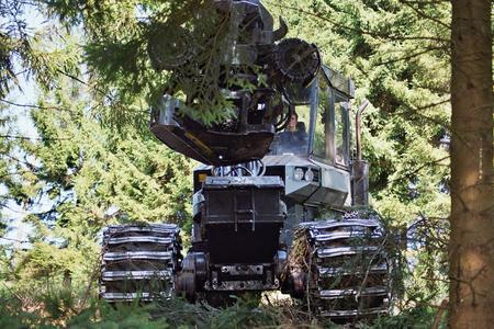 Nadelbäume aus nachhaltiger Forstwirtschaft liefern den Rohstoff für Holzfaserprodukte von INTHERMO. Geerntet wird mit dem Harvester; sein Bordcomputer klassifiziert und katalogisiert die Qualität. (Foto: Achim Zielke)