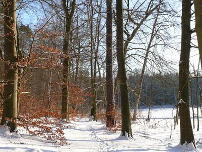 Winterwald im Müritz-Nationalpark