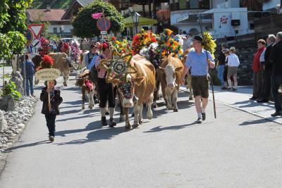 Bunt geschmückte Kühe durch Auffach / © Wildschönau Tourismus