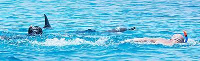 Schwimmer bedrängen zwei ruhende Delfine