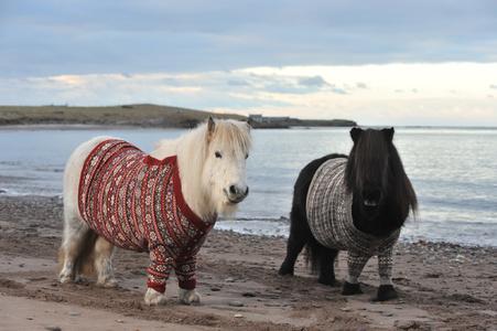 Schottland Pullover   © VisitScotland.jpg