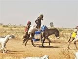 Nahrungsmittelnothilfe für bedürftige Binnenvertriebene und Rückkehrer in Nigeria