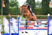 Verden Auctions - The first stage of sports careers also leading towards the International Dressage and Show Jumping Festival