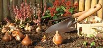 Jetzt ist der ideale Zeitpunkt, um im Garten Blumenzwiebeln fürs Frühjahr zu setzen. Bild: © hcast/stock.adobe.com/bauemotion.de