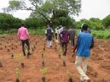 3: Gegen globale Erwärmung: Schulung zu Baumanpflanzungen und Düngemitteln