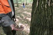 Eichelernte Herrenholz