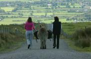 Wandern mit einem Irischen Esel