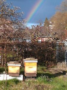 2 Bienenstöcke im Schrebergarten