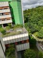 """Die """"grüne Lunge"""" auf dem Dach: Eine solche Wildwiese bietet Lebensraum für Insekten"""
