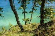 Ein Teilgebiet der Wälder des Nationalparks Jasmund wurde 2011 zum UNESCO-Weltnaturerbe erklärt (Bild: BFS / Nationalpark-Zentrum Königsstuhl / Karsten Bartel / Lehmann)