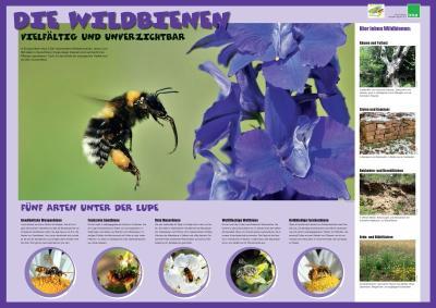 Vom Weltbienentag zum Tag der biologischen Vielfalt