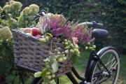 Geführte Radtour auf der Apfelroute mit Picknick in den Apfelplantagen