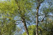 heilsame bäume