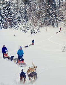 Thomas Gut betreibt im Bayerischen Wald Deutschlands erste Hundeschlitten-Schule. Der gelernte Diplom-Ingenieur hat sein Hobby zum Beruf gemacht / Foto: obx-news