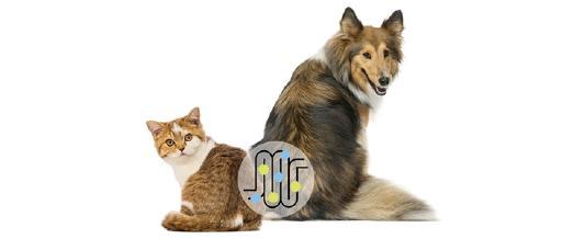 So wichtig ist die Darmgesundheit für das Wohl von Hunden, Katzen und Pferden