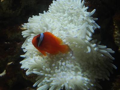 Clownfische Im Korallengarten Fasching Unter Wasser Im Frisch