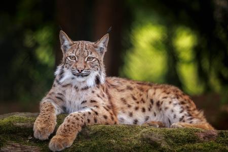 Foto: obx-news/Bayerwald Tierpark
