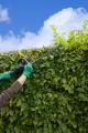 Ein Heckenschnitt hält die Heckenpflanzen gesund. Bild: © by-studio/stock.adobe.