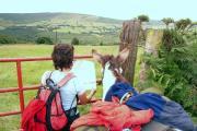 Wanderung Wicklow