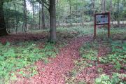 """Nicht nur der Mensch braucht klares, kaltes Wasser, sondern auch viele spezialisierte Pflanzen- und Tierarten wie z. B. die Rhön-Quellschnecke. Die Schautafel am """"Sauborn"""" zeigt auch ein Vorher-Foto des gefassten Brunnens, wo es den Lebewesen durch die Verrohrung nicht möglich war zwischen Grundwasser und Oberfläche zu wandern. Der """"Sauborn"""" liegt im Wald direkt an der Landstraße 3338 zwischen Breungeshain und Sichenhausen – er wurde exemplarisch für die über tausend Quellen im Vogelsberg als Na"""