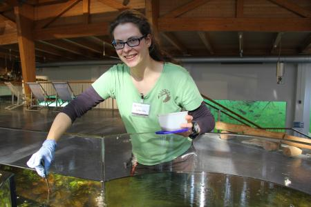Josefine Vater, Biologin im Wildpark-MV, füttert die Dreistachligen Stichlinge mit Mückenlarven (Foto: Wildpark-MV)