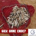 EU-Fischer: Subventionen trotz Emissionen – EU subventioniert Überfischung und Delfinmassaker im Golf von Biskaya