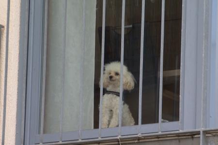 Pudel Milan wartet auf seine Hundehalterin. © SWR, Neue Artfilm 2017