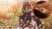 Herbstgrasmilben beim Hund erkennen & behandeln