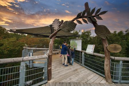Seit 2005 ist der Baumkronenpfad im Nationalpark Hainich ein beliebtes Ausflugsziel Naturbegeisterte jeden Alters