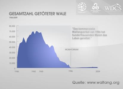 Offizielle Walfangzahlen belegen