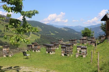Neu in der Wildschnau: Gefhrte Bienenwanderung / Tirol