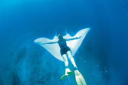 Walhaie in Westaustralien