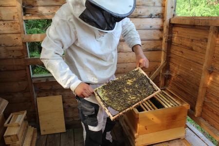 Von einem, der die Bienen liebt