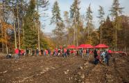 Rund 80 Kunden und Sparkassenmitarbeiter pflanzten am Samstag Bäume im Friedrichsdorfer Stadtwald