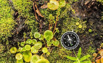 In den Yorkshire Dales lernen Naturfans, sich auf traditionelle Art mit dem inneren Kompass zu orientieren