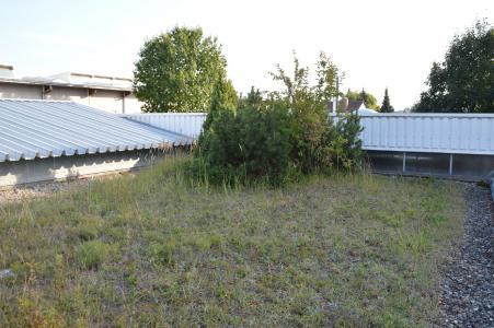 Eine Graslandschaft mit Buschwerk: Auch das ist auf einem fachgerecht angelegten Gründach möglich.