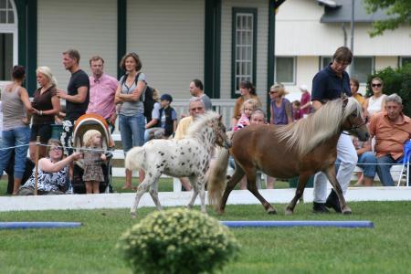15. Shetland-Pony-Festival im Sportpark