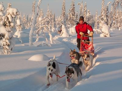 Hundeschlittentouren Finnland