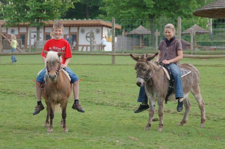 Erweitertes Parkangebot: Esel- und Ponyreiten
