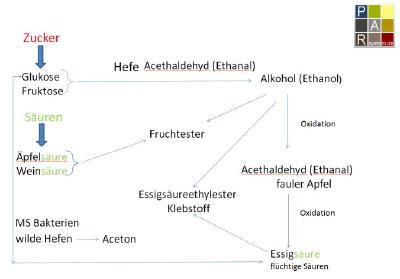 Weinbau, Kellertechnik und Grundlagen der Sensorik 2018