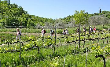 Toskanafeeling erwartet die kleinen Gruppen in der Weinbergregion Colli Orientali del Friuli